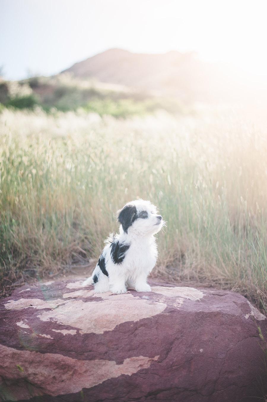 Majesitc Puppy at Red Rocks