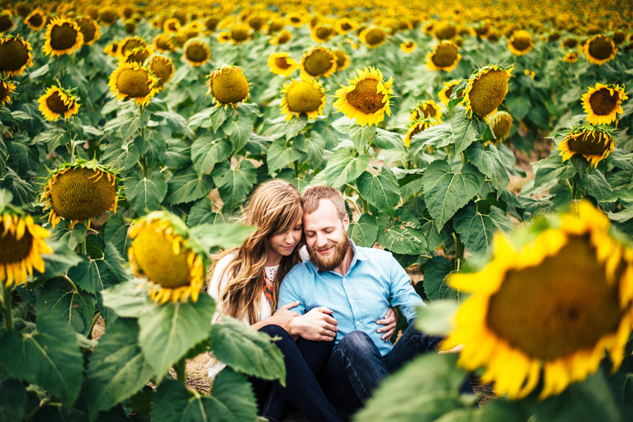 loving couple embrace while sitting among giant sunflowers near the Denver Airport