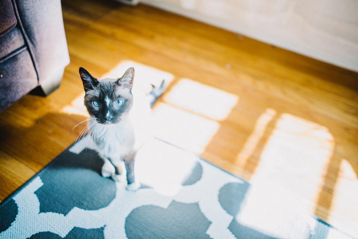 cat sitting in sun light