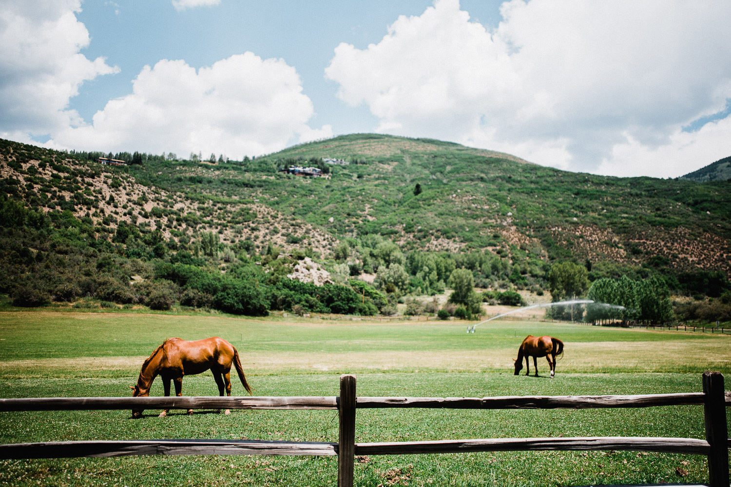 Horses graze on a ranch in Aspen, Colorado