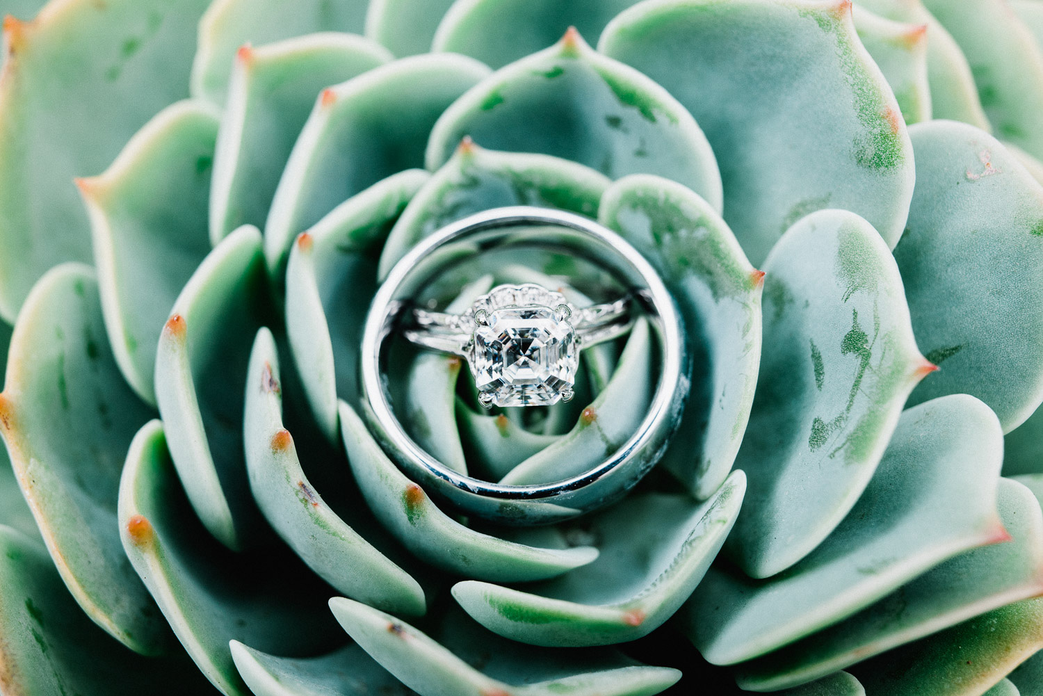 wedding ring on succulent