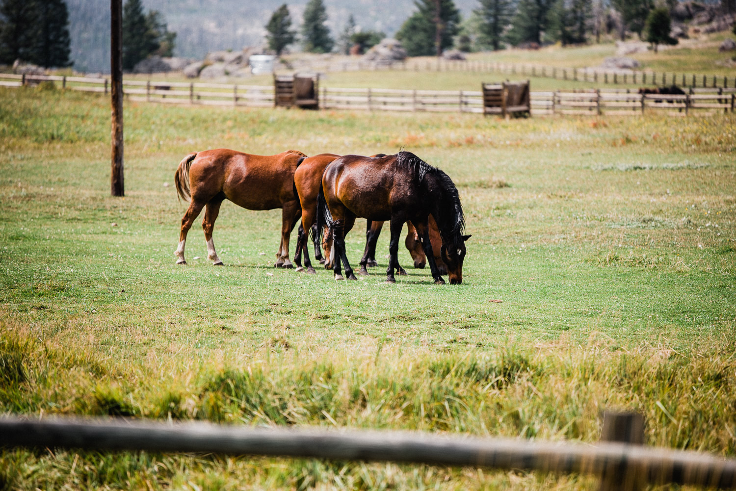 horses at stove prairie ranch in bellvue colorado